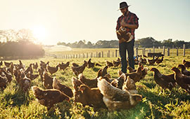 Poultry farmer with his chickens in field.